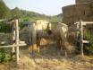 Horse riding Patara