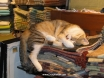 Koton cat