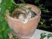 Kalkan cat