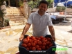 Adam and his tomatoes