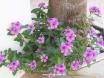 Such pretty flowers