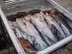 Seaport fresh fish