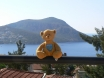 Bear on Holiday