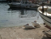 Kas Pelicans